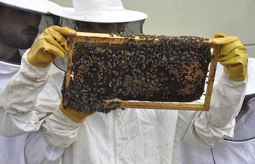 Taller-amb-abelles